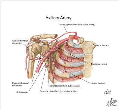 Axillary Artery Aneurysm - Shoulder Pain differential Diagnosis